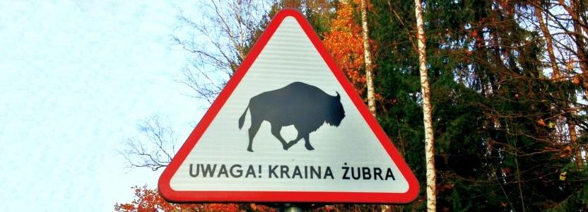Strategia zarządzania i promocji turystyki Puszczy Białowieskiej